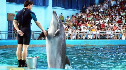 海豚表演握手