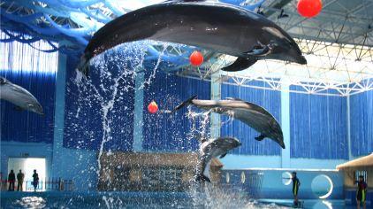 海豚表演高空击球