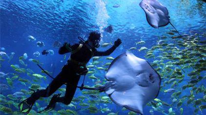 玩球直播nba海昌鲸鲨馆图片 (41)
