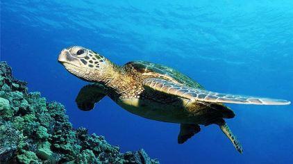 烟台海昌鲸鲨馆图片 (56)