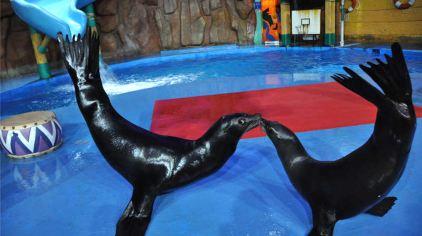 烟台海昌鲸鲨馆图片 (59)