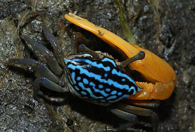 一天八次变身的奇葩螃蟹,至于味道嘛,或许吃货的你就有些伤心了